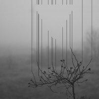 Геометрия тумана :: Александр Засимович