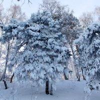 Конец января :: Галина