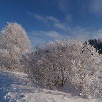 Мороз приукрасил. :: Антонина Гугаева