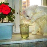 И что там в стакане? :: Владимир Ростовский