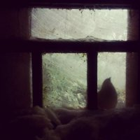 Птица в окне :: Диана