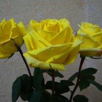Солнечные розы. :: Антонина Гугаева