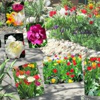 Апрель-пора тюльпанов... :: Тамара (st.tamara)