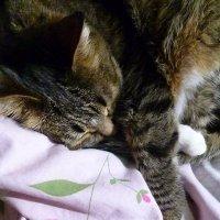 Сладкий сон :: Mary Коллар