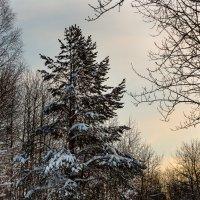 зимняя тишиа :: Александр Шипов