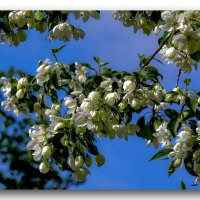 в ожидании весны :: gribushko грибушко Николай