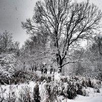 А снег идет.... :: Андрей Зайцев