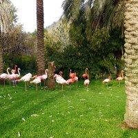Зоопарк библейских животных в Иерусалиме :: Любовь Белянкина