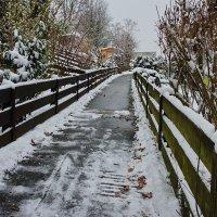 Что-то от зимы... :: Walter