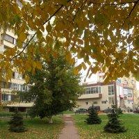 мой город осенью :: Елена Семигина