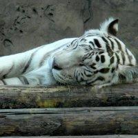 Спящий... :: Елена