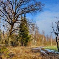 Зимой  весна  пришла.  3  февраля. :: Валера39 Василевский.
