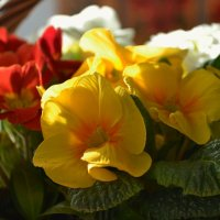 Цветы :: Светлана