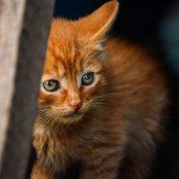 Взрослые глаза маленькой кошки :: Екатерина Лещенко