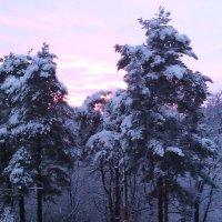 Красивый закат в Сестрорецке 02.02.2015 :: Светлана Безрукова