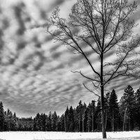 Одиночество :: Елена Решетникова
