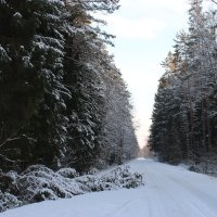 Однажды в зимнем лесу... :: Mariya laimite