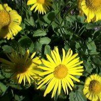 ЦвеТочки :: Миша Любчик