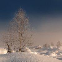 Морозное утро :: Дмитрий Купрацевич