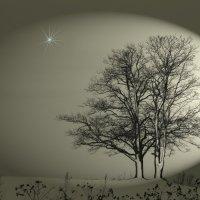 Светит незнакомая звезда.... :: Tatiana Markova