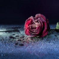 Одна в ночи :: Вера Бережная