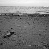 Пустынный берег :: Мария Кондрашова
