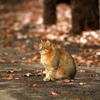 Осенний кот :: Дмитрий Ананьев