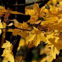 Просто Осень... :: WADIM *****