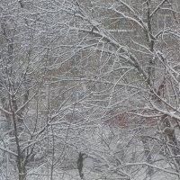 А снег идёт, а снег идёт... :: Татьяна Юрасова