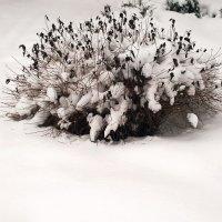 Зимний букет :: Николай Дони