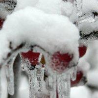 Яблоки во льду :: Игорь Шубовичь