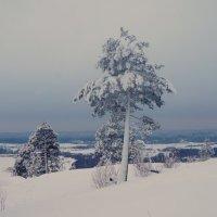 на снежной вершине :: Сергей