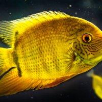 рыба :: Gleb Sidorov