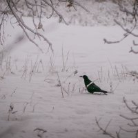 шагающая птица :: Катерина Орлова