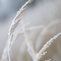 зима. :: Лена Самченкова