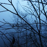 Капли тумана... :: Дарья Михальчик
