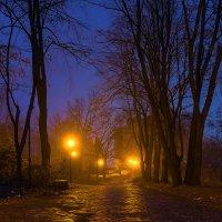 В свете ночных фонарей :: Denis Aksenov