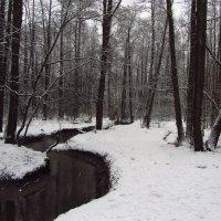 Еще - из прошлой зимы (3) :: Андрей Лукьянов
