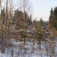Морозный день. :: zoja