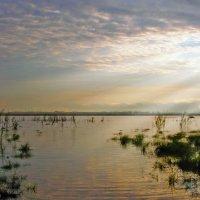 Утром на озере... :: Сергей Щелкунов