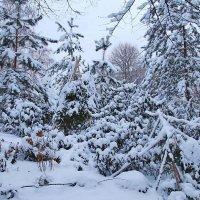 В Аптекарском зима :: Nikolay Monahov