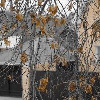 Осень в окне! :: Андрей Смирнов