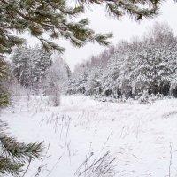 Зима за городом :: Павел Шалаев
