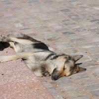 Долго шел,устал и просто упал)))) :: Александр Картеропуло