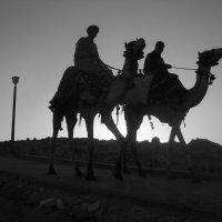 Закат в Египте :: Сергей Григорьев
