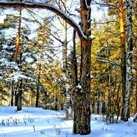 зима в лесу :: Краснов  Ю Ф