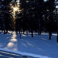 Зимняя прогулка :: Таня Фиалка
