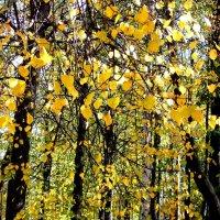 Осенние листья шумят :: Фотогруппа Весна.