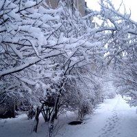 Деревья в зимнем наряде :: Елена Семигина