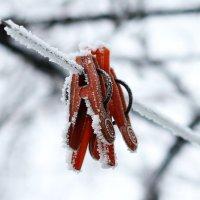 Замёрзли :: Руслан Веселов